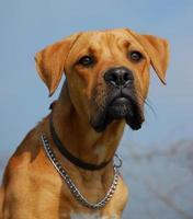 dangerous dog photo
