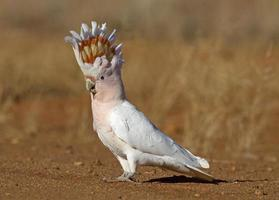 A colorful cockatoo standing outside