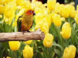oiseau conure soleil dans le jardin