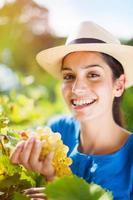 alegre joven cosechando las uvas en los viñedos foto