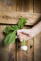 Farmer Holding Turnip photo