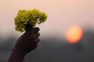 manos sosteniendo ramo de flores de mostaza foto