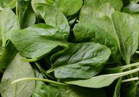 Freshly washed green spinach leaves