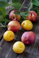 Fresh plums on wooden table photo