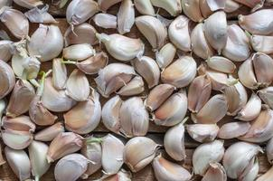 Cloves of garlic harvest on a wooden table photo