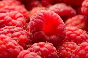 Raspberries photo