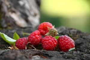 Fresh raspberries photo