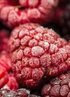 Frozen raspberries photo