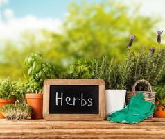 hierbas frescas en macetas foto