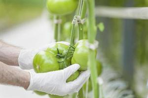 Greenhouse technology photo