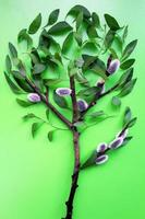 árbol foto