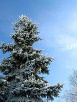 arbol de invierno
