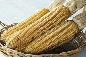 Dried corn in basket