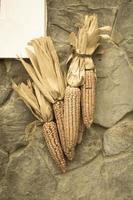 Dried corn cobs photo