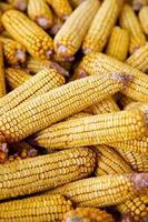 pile of corn cobs photo