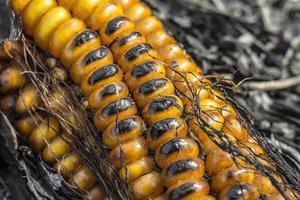 maíz quemado
