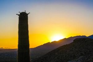 sunset with beautiful green cacti in landscape photo