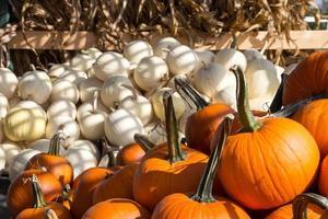Orange and white pumpkins photo