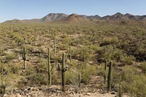desert with saguaro cactus photo
