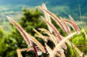 flores de hierba foto