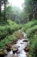 río en bosque foto