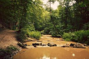 Summer creek photo