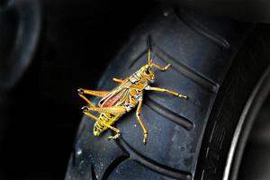 Summer time bug