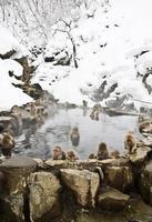 mono de nieve: piscina entera