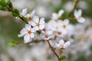 primavera floreciente foto