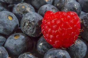 single raspberry photo