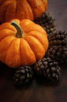 Miniature pumpkin Autumn Fall background Halloween