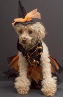 Witch Cutie