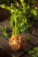 Raw Organic Celery Root