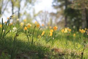 hermoso paisaje de flores