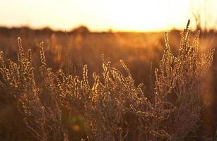 paisaje de arbustos ardientes
