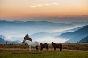 paisagem montanhosa com cavalos pastando