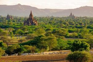 Landscape view of ancient temples with cows and fields, Bagan