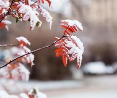 arbusto de invierno