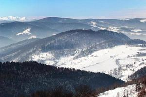 bosque de montaña de invierno