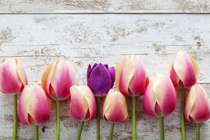 Row of pink tulips on wooden background