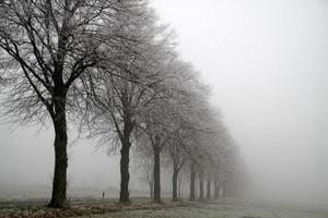 linha de árvores no nevoeiro com estrada