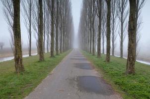 bicicleta de carretera entre hileras de árboles en la niebla