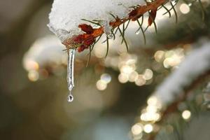 belleza de invierno