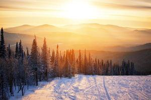 winter forest sunset photo