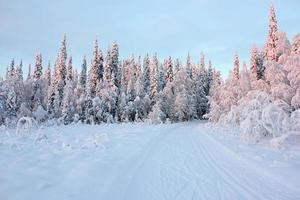 Winter snowy road in forest photo
