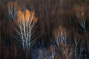 Winter Rhyme in Bashang 19