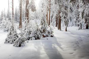 bosque de invierno en las montañas