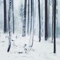 Winter foggy forest scene photo