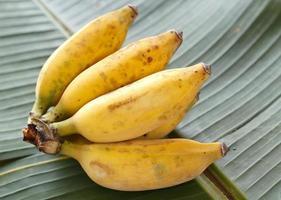 plátanos foto