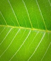la hoja verde sobre la naturaleza foto
